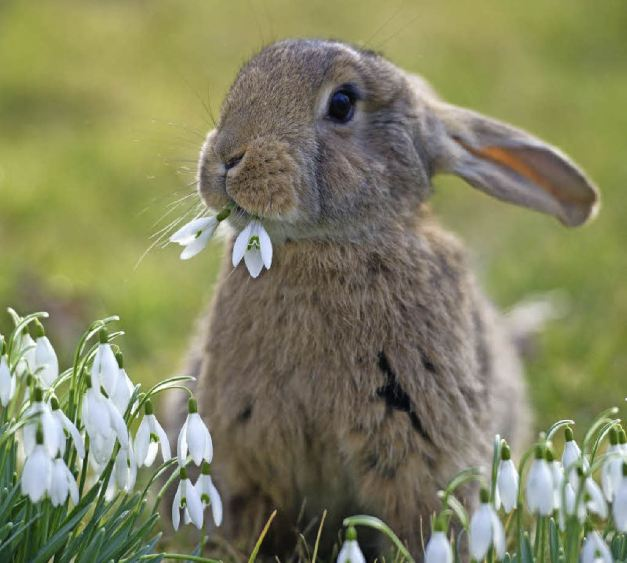 Hase Ostern 2017