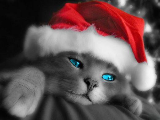 Animals and Christmas ~ Animal Space